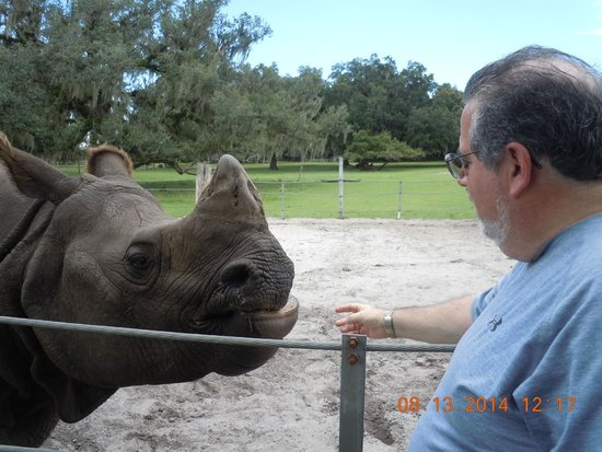 Giraffe Ranch: Feeding a rhino