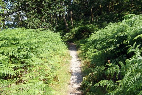 West Highland Way: sentiero fra le felci
