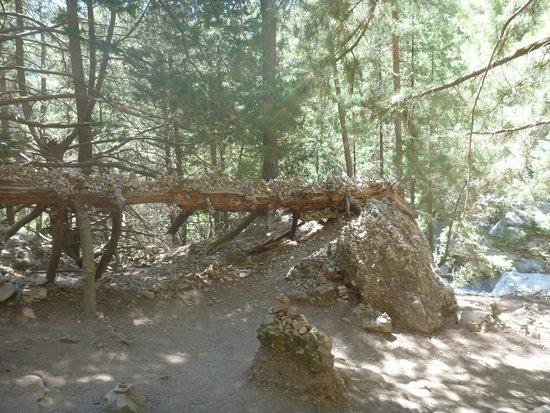 Samaria Gorge National Park: Добрый люди решили украсить это дерево своими пирамидками