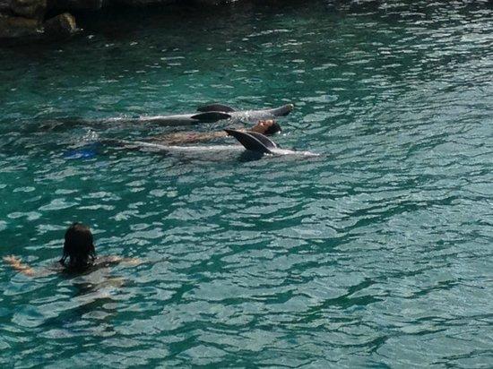 Dolphin Academy Curacao: Boiando