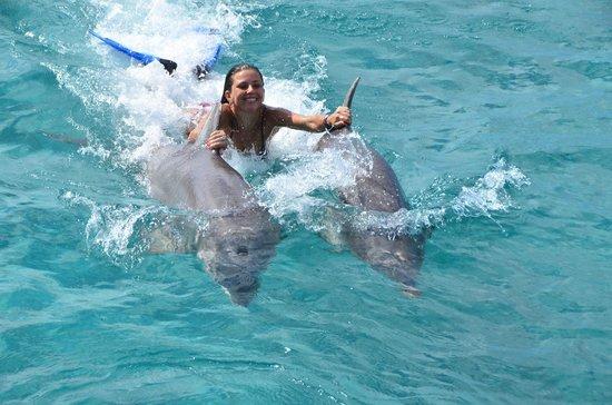 Dolphin Academy Curacao: Dolphin Swim