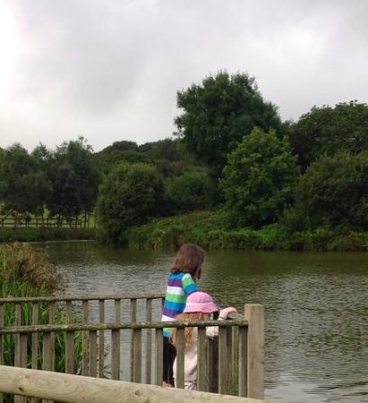 Camel Creek Adventure Park: watching the massive carp in the lake