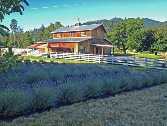 Lavender Fields Forever: The barn has a store, lavender drying area and the distillery.