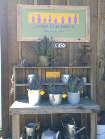 Lavender Fields Forever: The potting table with fresh lavender bouquets of lavender await your visit - or pick-your own!