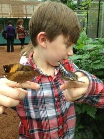 Jardin des Papillons: un posé de papillons !!