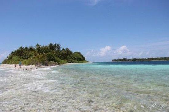 Maldive Due Palme: HOLIDHOO