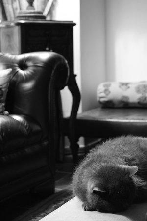 Olivia House: Main Room and cat