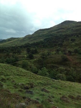 WOW Scotland Tours : Emerald Green