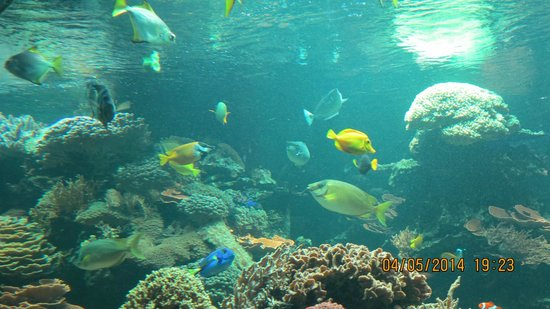 "Tiergarten Schoenbrunn - Zoo Vienna: ""Мальдивы"" в Шенбрунне."