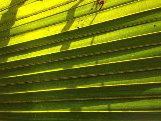 Jardin Majorelle : Close up of cactus