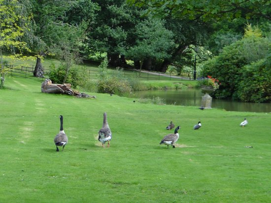 PowderMills Country House Hotel: Resident Geese