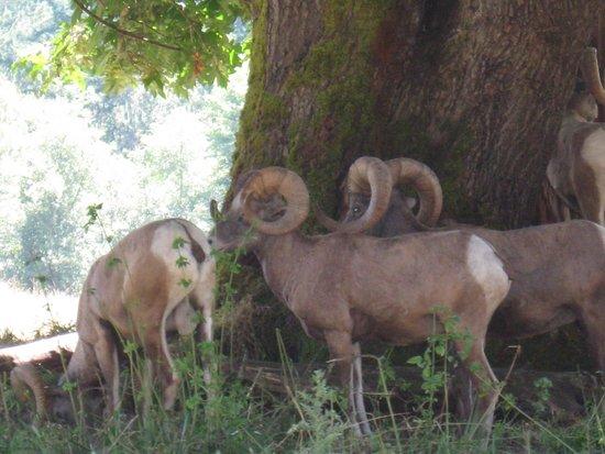 Northwest Trek Wildlife Park: Animals enjoying some shade