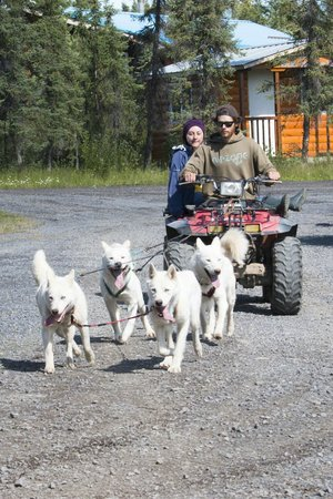 The Arctic Chalet Resort: Summer training of Arctic Chalet sled dogs
