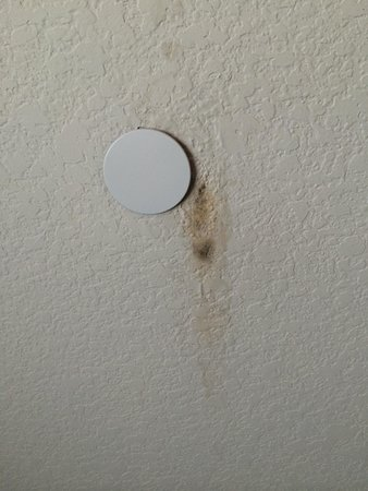 Days Inn & Suites Galveston West/Seawall: Mold on our ceiling.