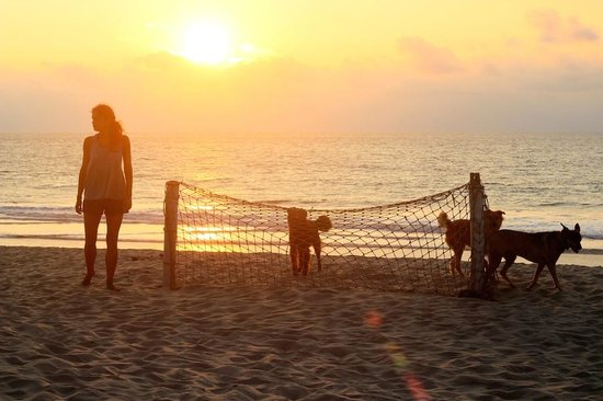 Donkey Den Guest House: walk on the beach with the dogs.
