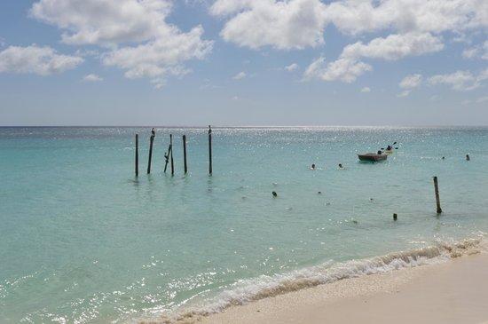 Tamarijn Aruba All Inclusive: Pelicans resting