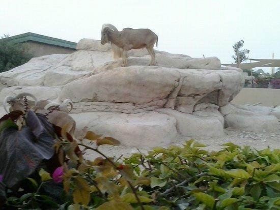 Al Ain Zoo: climbing mt everest lol