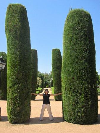 Alcázar de los Reyes Cristianos: Weird trees