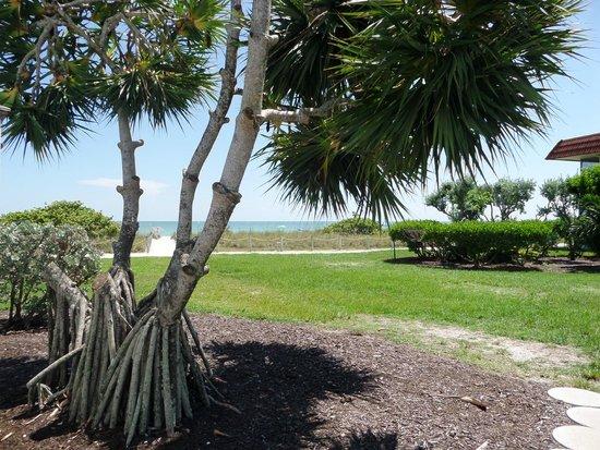 West Wind Inn: Nice gulf view