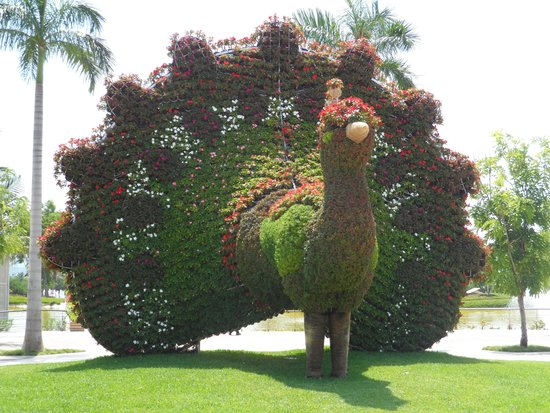 Jardines de m xico picture of jardines de mexico for Jardines mexico
