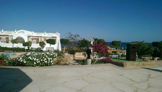 Melia Sharm Resort & Spa: By the pool