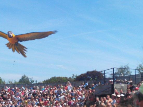 Le Parc des Oiseaux : Trop belle photo que j'ai prise.