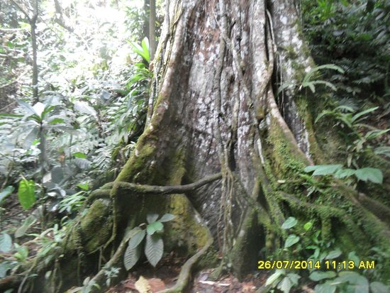 Route de la Traversee: che albero!