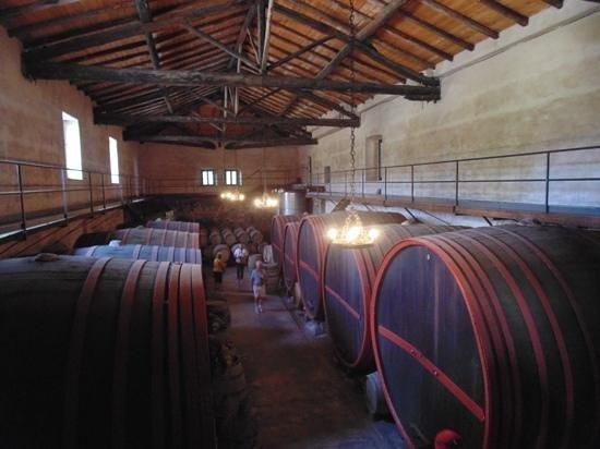 Wine Resort Villagrande: The wine cellar