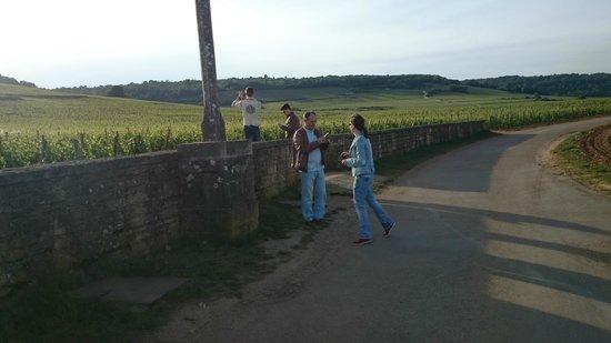 Bourgogne A La Carte Burgund Experiment Tours Visiter Les Vignes Clbres