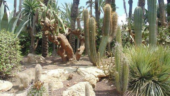 Jardín Artístico Nacional Huerto Del Cura: Cacti