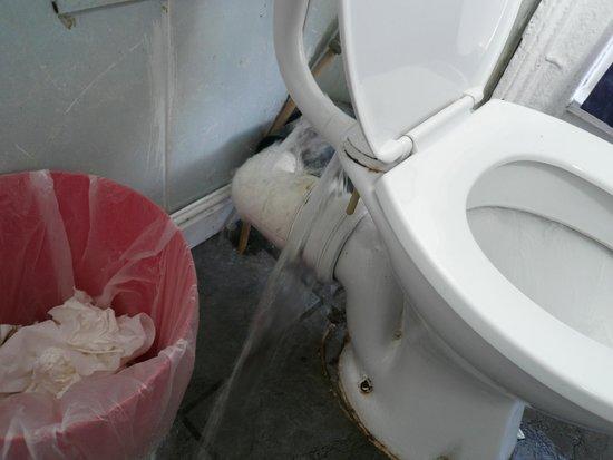 Citi Backpackers Hostel: Toilette mit Überaschungseffekt