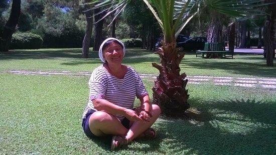 Fantasia Hotel De Luxe : Пальмочки на территории
