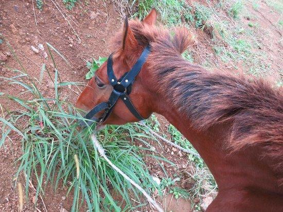 Rabosea Bed & Breakfast : Horse riding