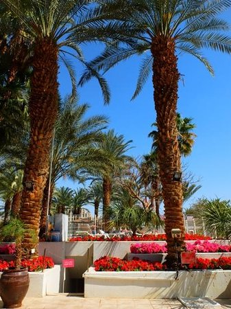 Leonardo Plaza Hotel Eilat: отель