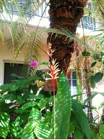 La Casa Hotel: tropical gardens around pool/deck
