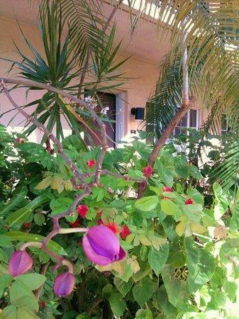 La Casa Hotel: gardens around pool/deck