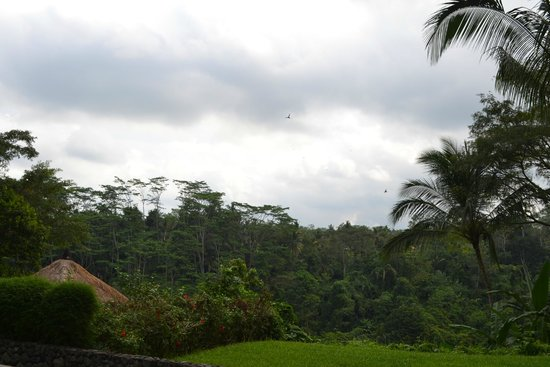 Alila Ubud: Deluxe room view from terrace