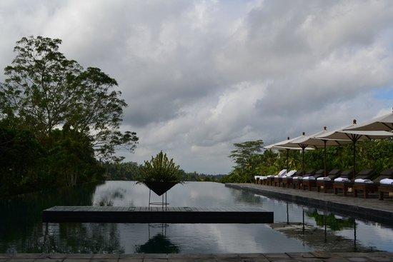 Alila Ubud: Gorgeous infinity pool