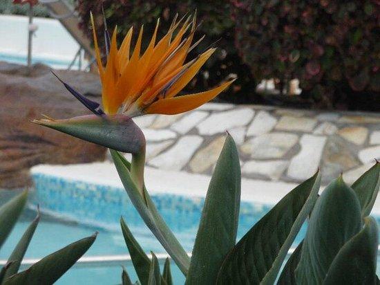 Jardines de Nivaria - Adrian Hoteles: jardin splendide
