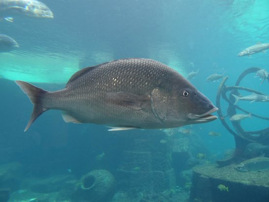 Marine Habitat at Atlantis: Big fish