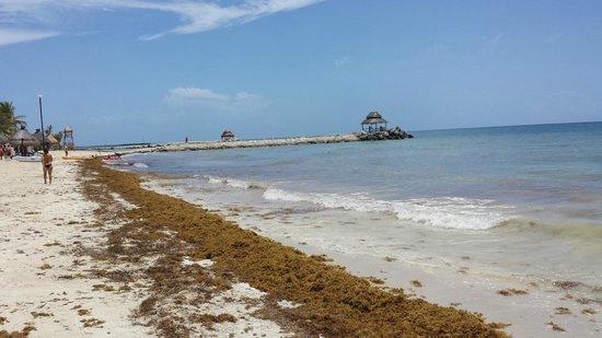 Hotel Marina El Cid Spa & Beach Resort : More dying seeweed