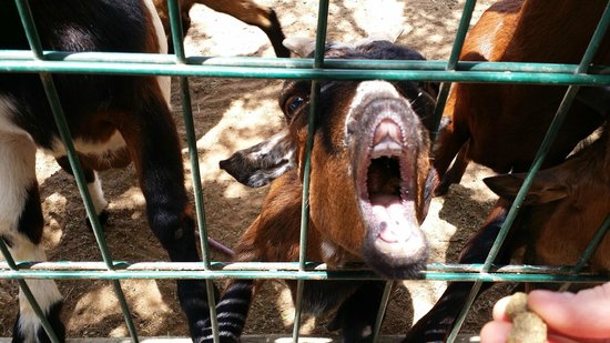 Philip's Animal Garden: basketball holds his mouth open for food