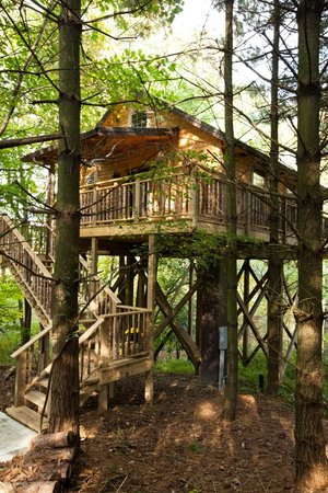 Pine Cove Lodging: Wild Cherry Treehouse