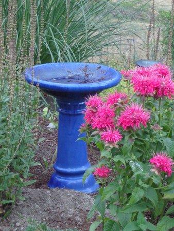Green Cat Guest House and B&B: Birdbath in herb garden