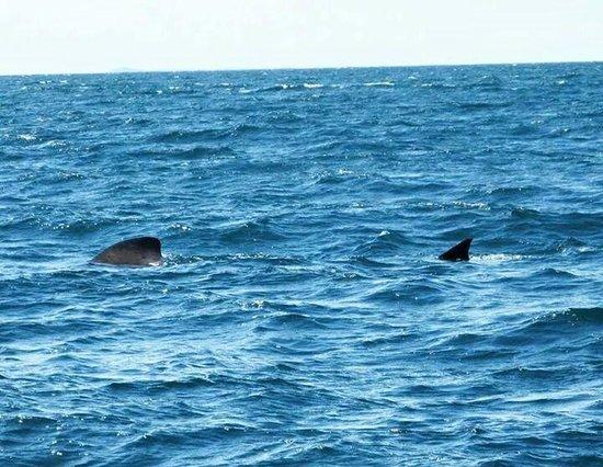 Turus Mara : Basking Shark