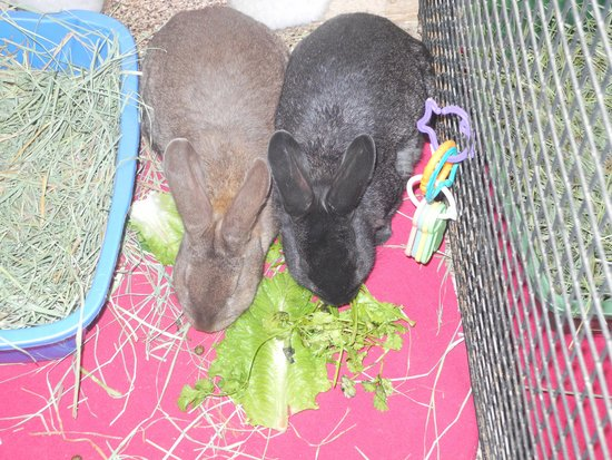 Best Friends Animal Sanctuary : In the Bunny House - Snack Time