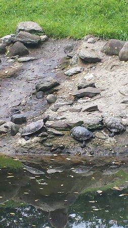 Riverside Park: I found turtle
