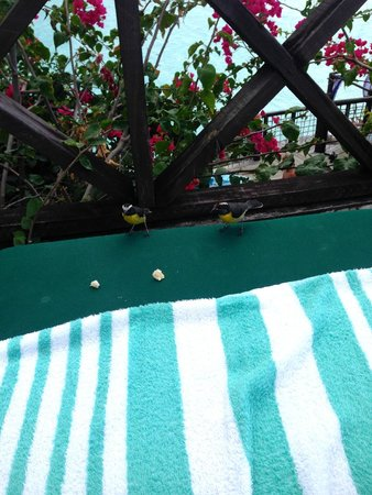 Cocobay Resort: These cute little birds wanted my sandwich