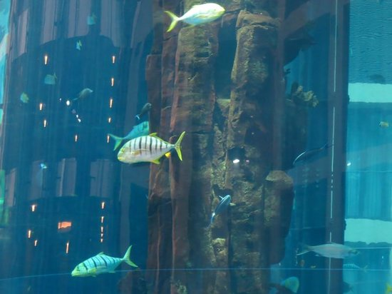 Radisson Blu Hotel, Berlin: fish