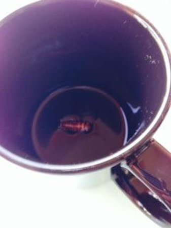 Barcelo Maya Palace: cockroach that made its way into my coffee mug!